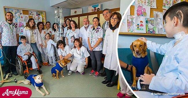 Tres perritos ayudan a pequeños pacientes oncológicos a recuperarse en Granada