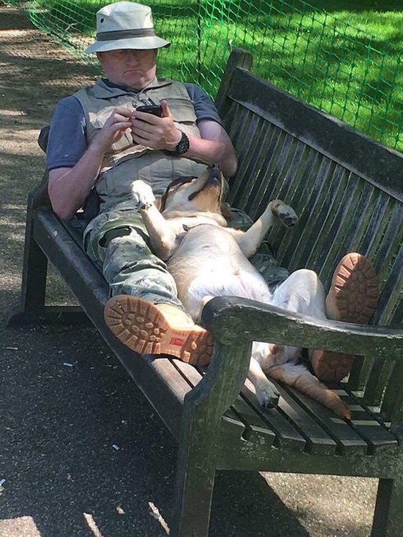 Perro descansando en el parque / Imagen tomada de: Reddit