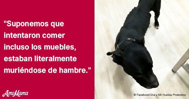 Mujer finge ser amante de los animales y deja que dos perros se mueran de hambre
