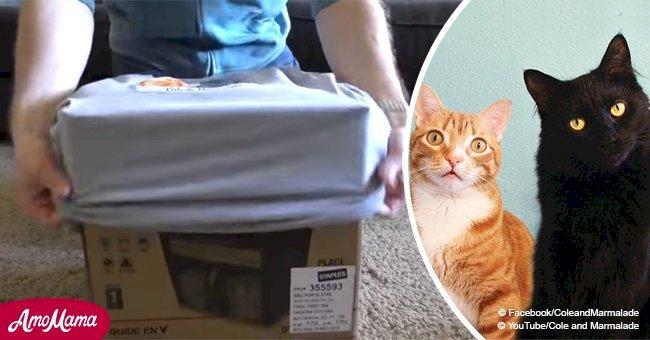 Asombrosos trucos para facilitar la vida de los dueños de gatos