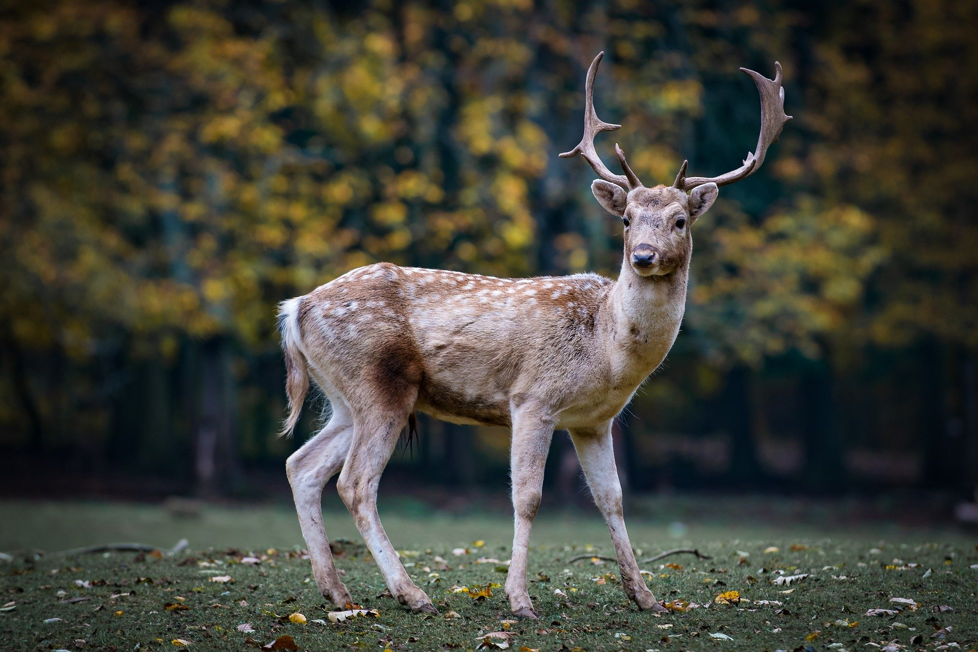 I love being able to see the deer so close to my home!   Photo: Pixabay/hashan