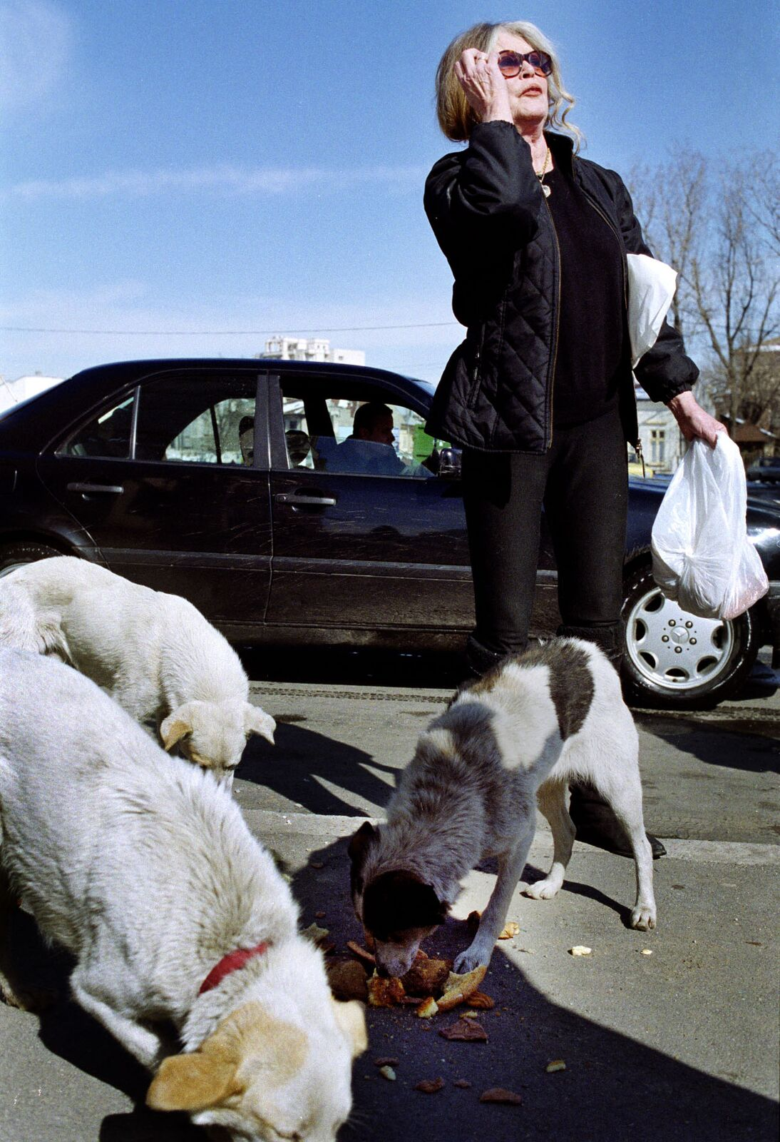 Brigitte Bardot donne du pain à des chiens, en Roumanie. | Photo : Getty Images
