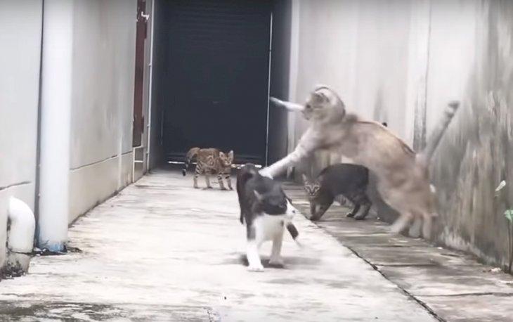 Source: Youtube/Super Cat