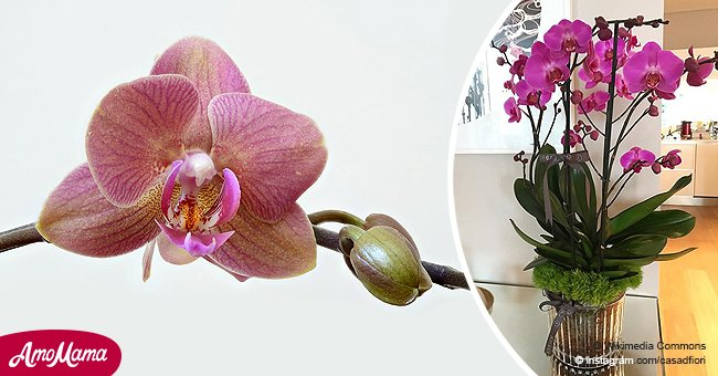 Do you have an orchid? Here's a way you can get your plant looking all pretty again
