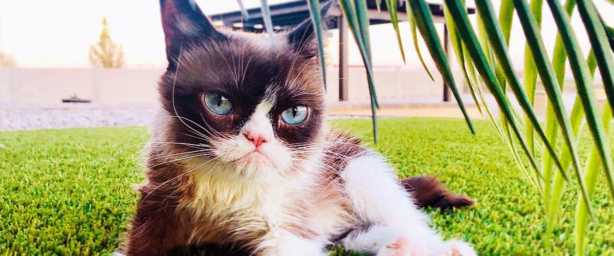 Grumpy Cat meurt à l'âge de 7 ans : que s'est-il passé?