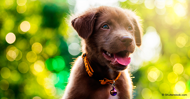 Un homme qui avait perdu son chien bien-aimé reçoit un nouveau chien et sa réaction est incroyablement touchante (vidéo)