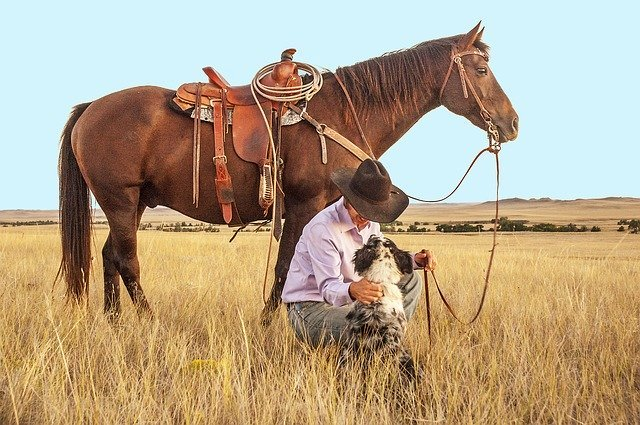 A man in a farm pets his dog next to his horse while out in the county. I Photo: Pixabay.