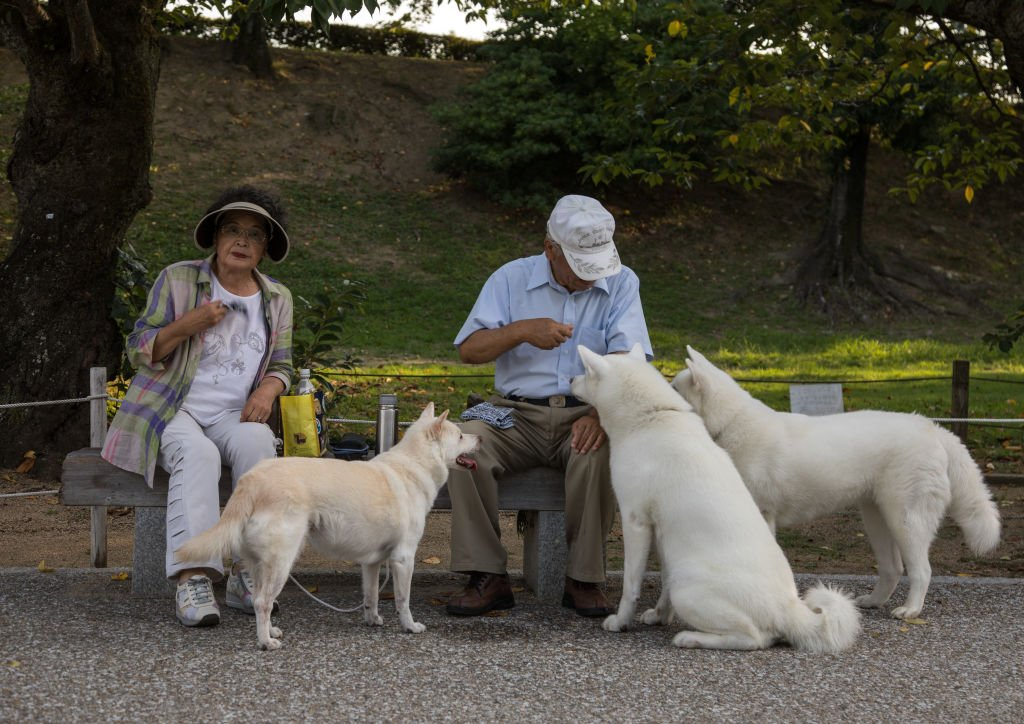 Couple feeding dogs in a park| Photo: Getty Image