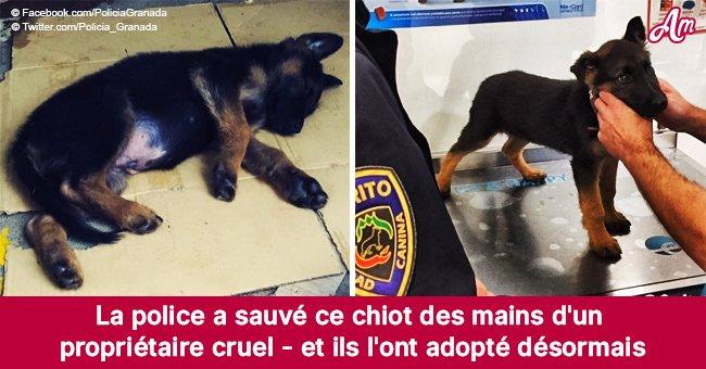 Après avoir arrêté un homme pour cruauté envers les animaux, la police a adopté son chiot maltraité