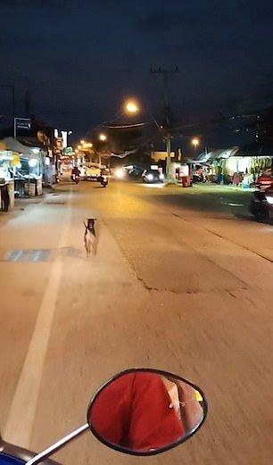 Perro abandonado por sus dueños.| Imagen tomada de: YouTube/Viral Press