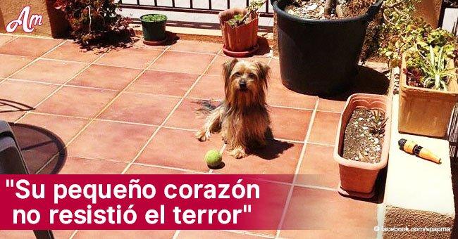 Trágica historia de Pancho, el perro que murió en Nochebuena por culpa de fuegos artificiales