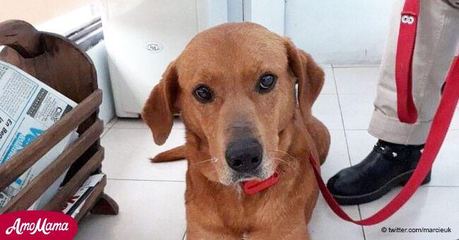 Une famille a rendu son chien adopté après une semaine parce qu'il avait volé de la nourriture à la table