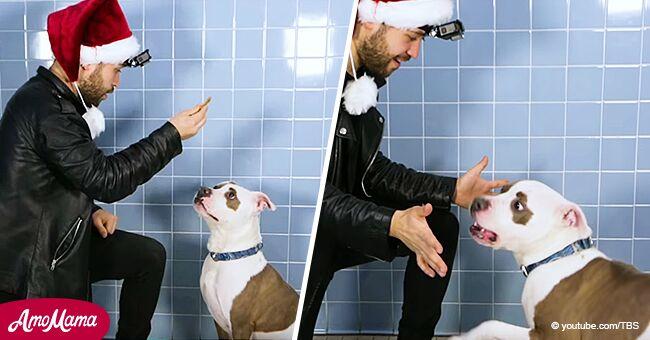 Le magicien joue un tour de cartes pour encourager le chien de refuge et il a la réaction la plus drôle qui soit