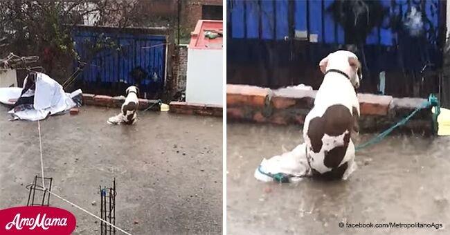 Cette triste vidéo montre un pauvre chien laissé sur le toit sous une pluie abondante