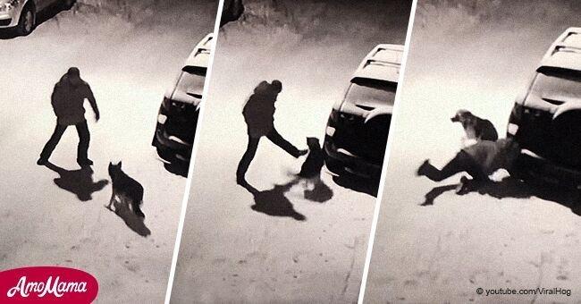 Un homme ivre tente de donner un coup de pied à un chien innocent, mais il le paie tout de suite et tout a été enregistré sur vidéo