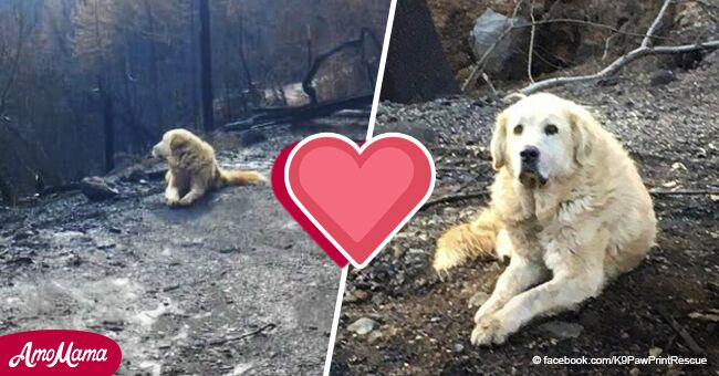 Un couple qui a quitté leur maison pendant les incendies de forêt découvre que leur chien les avait attendus pendant tout ce temps