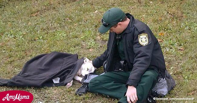 Un chien a été frappé par une voiture et un policier a montré comment traiter les animaux en le réconfortant