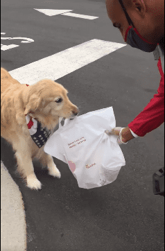 Ellie the golden retriever doing a curbside pickup on her owner's behalf. | Source: Facebook/Chick-fil-A at Carraway Village.