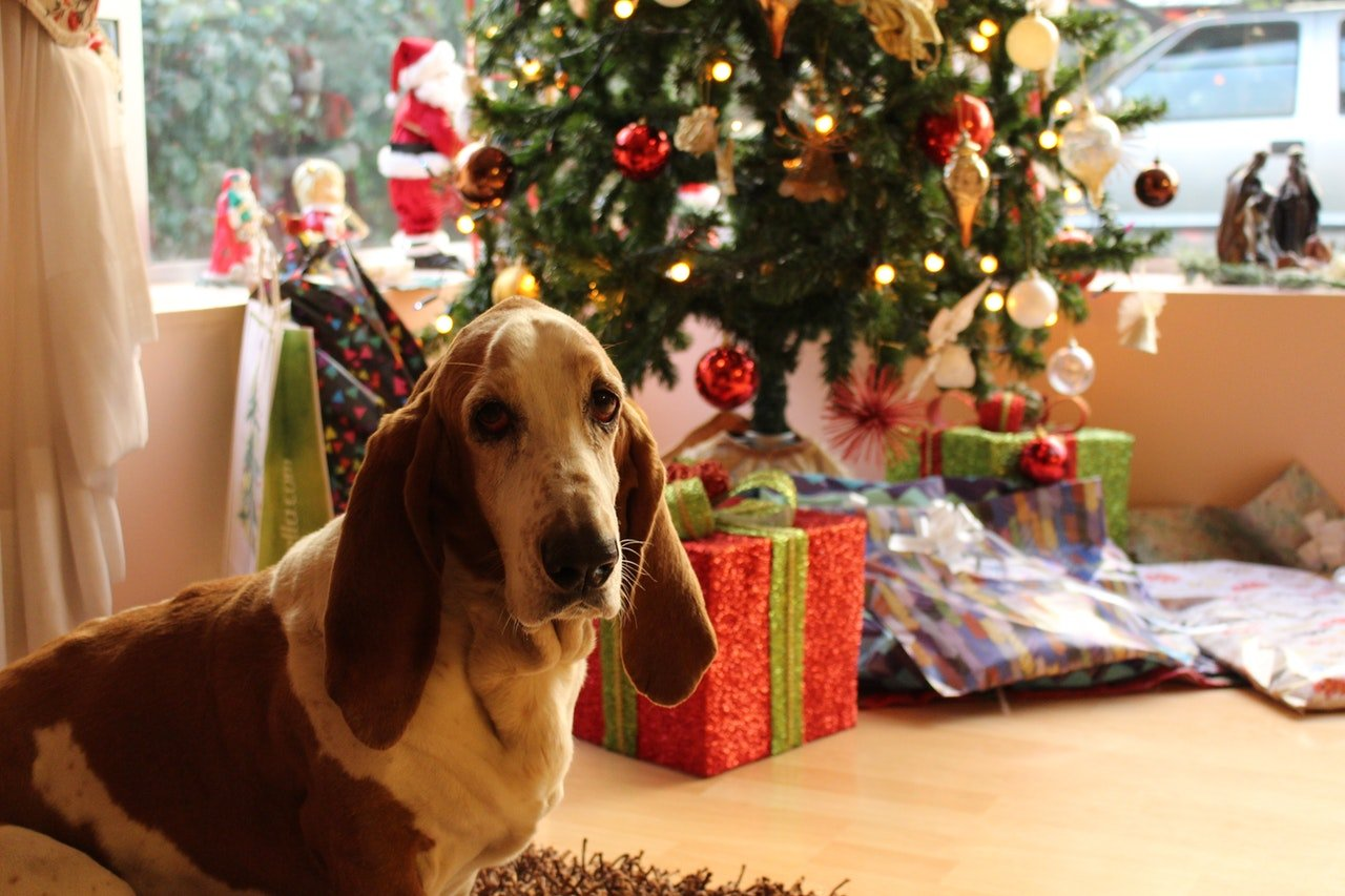 Photo of a beautiful dog by a Christmas tree   Photo: Pexels