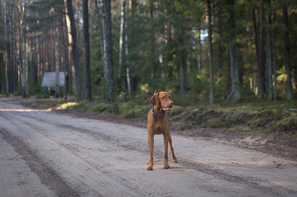 Perro en medio de una carretera. | Imagen: Max Pixel