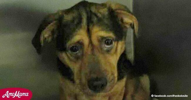 Un chien était accablé par la tristesse jusqu'à ce qu'une femme ne fasse un trajet de 6 heures pour le sauver