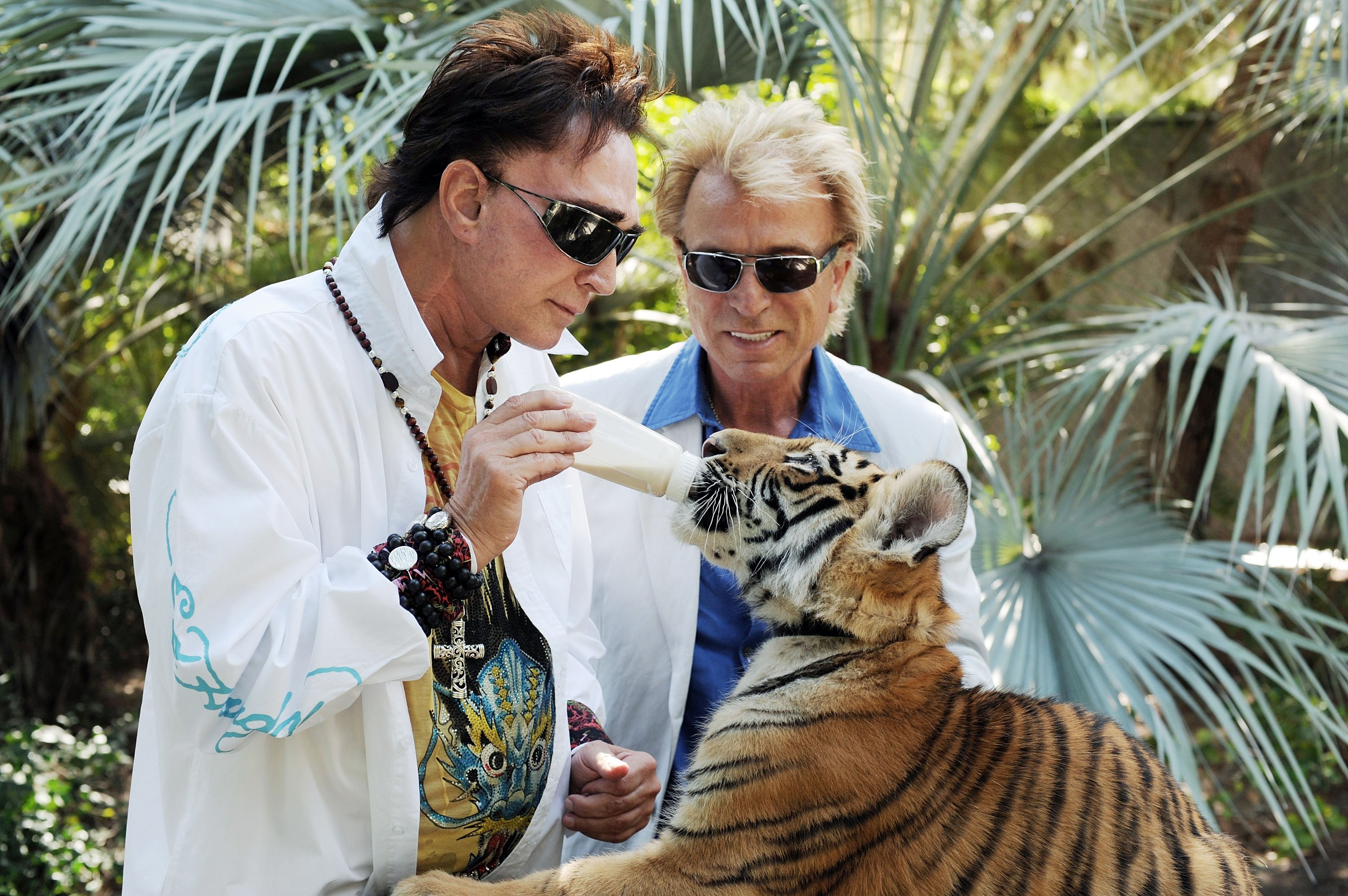 Siegfried Fischbacher and Roy Horn feeding one of their tiger cubs in Las Vegas in August, 2008. | Photo: Getty Images.
