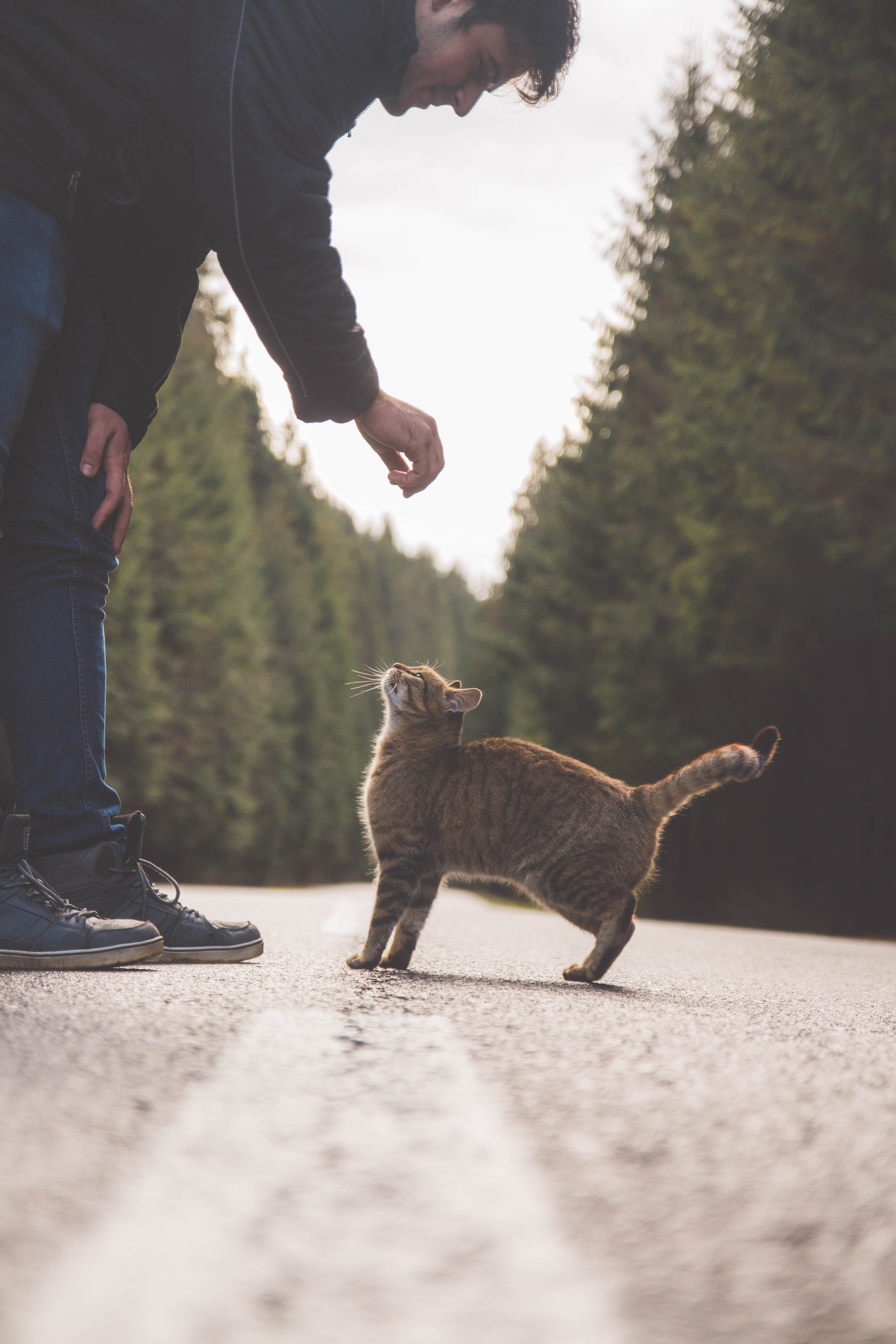 A man with a cat in the road. | Photo: Pexels