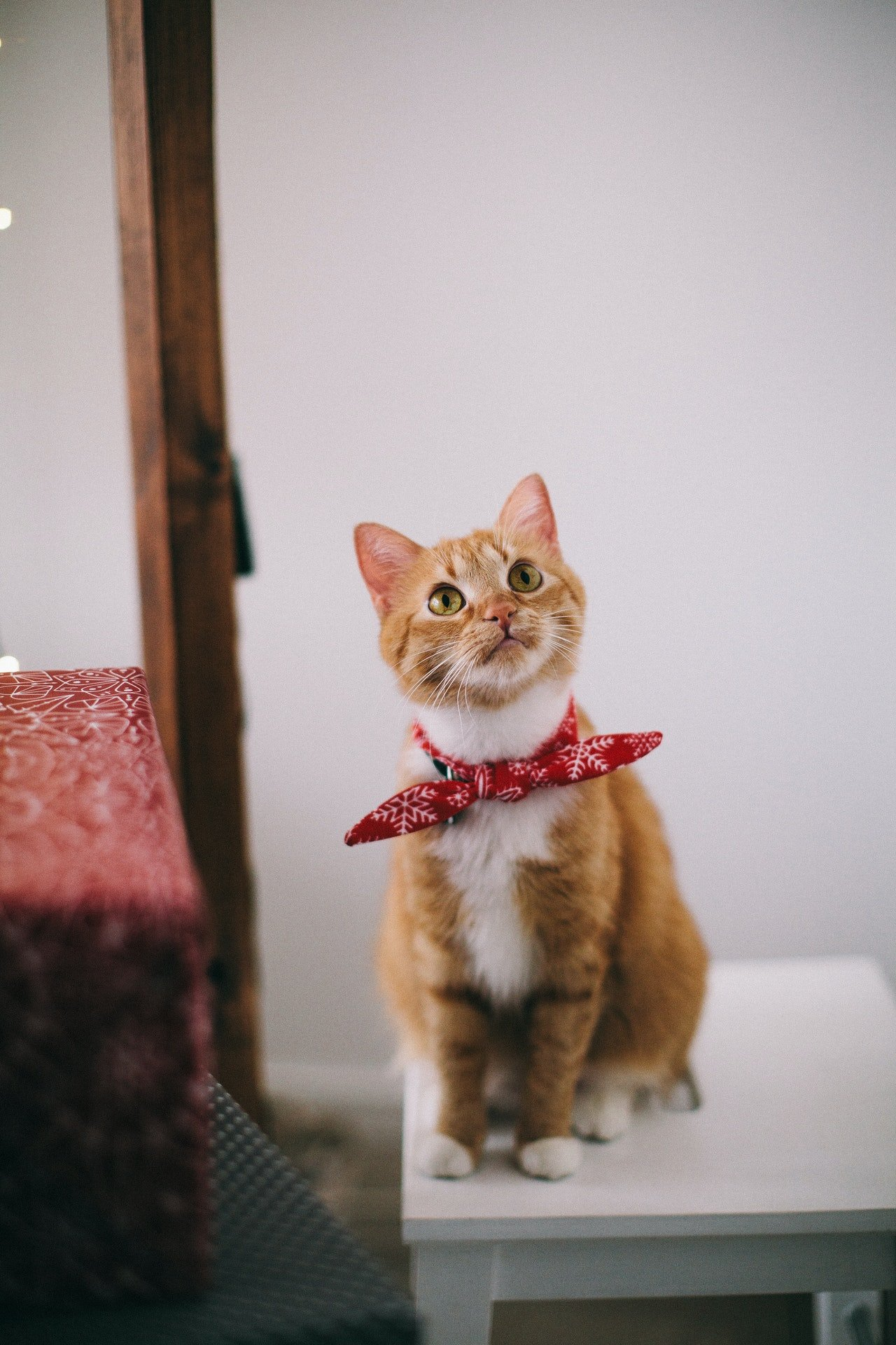 Photo of a cat sitting on a stool   Photo: Pexels