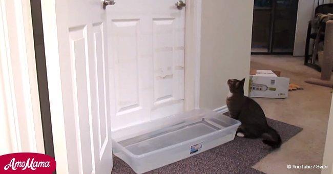 Cómico momento en que plan de hombre para evitar que gato lo despierte es burlado por listo animal