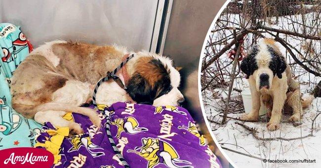 Viejo perro de rescate salvado después de estar perdido por más de dos semanas en nieve helada