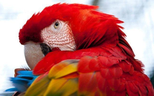 Nahaufnahme von Papagei | Quelle: Flickr