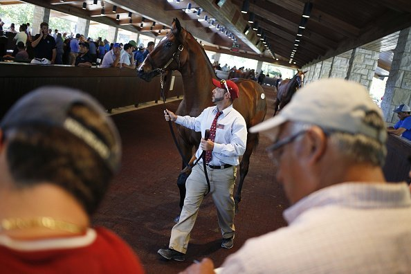 A thoroughbred racehorse walks around an arena before being displayed for sale on the auction block | Image: Getty Images