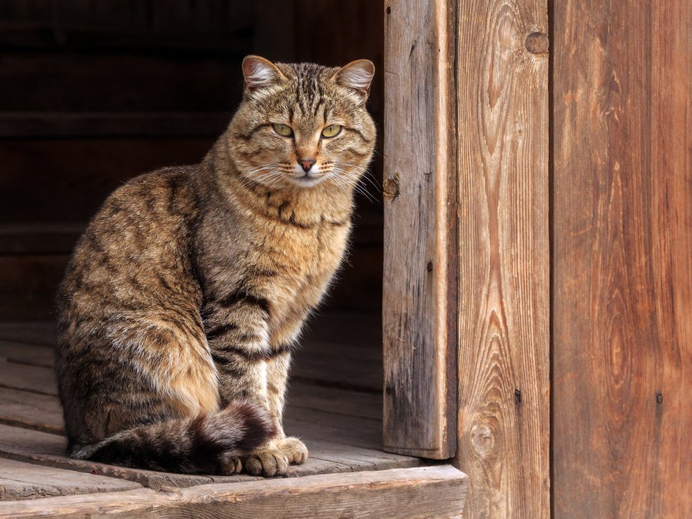 A photo of a cat perched on a doorway | Photo: Shutterstock