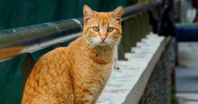 Shelter in Chicago Fights Rodents by Releasing 1,000 Neutered Cats on City Streets