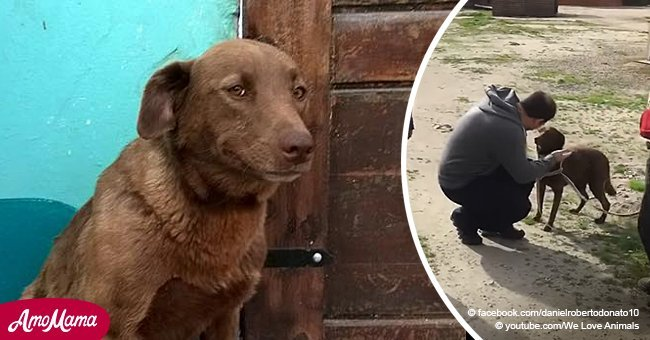 Depressed dog spends two years in shelter before reunited with owner