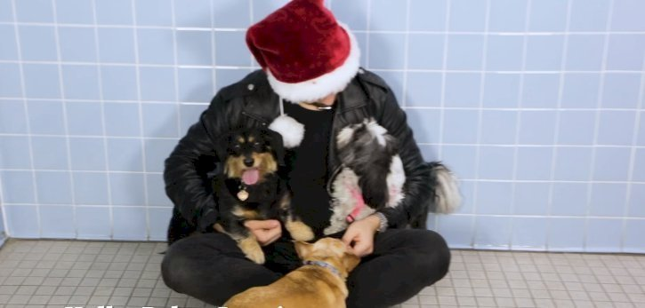 Source: Magic for Animal Shelter Dogs   TBS