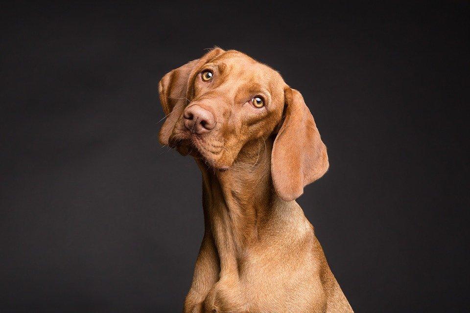 Un chien   Photo : Pixabay
