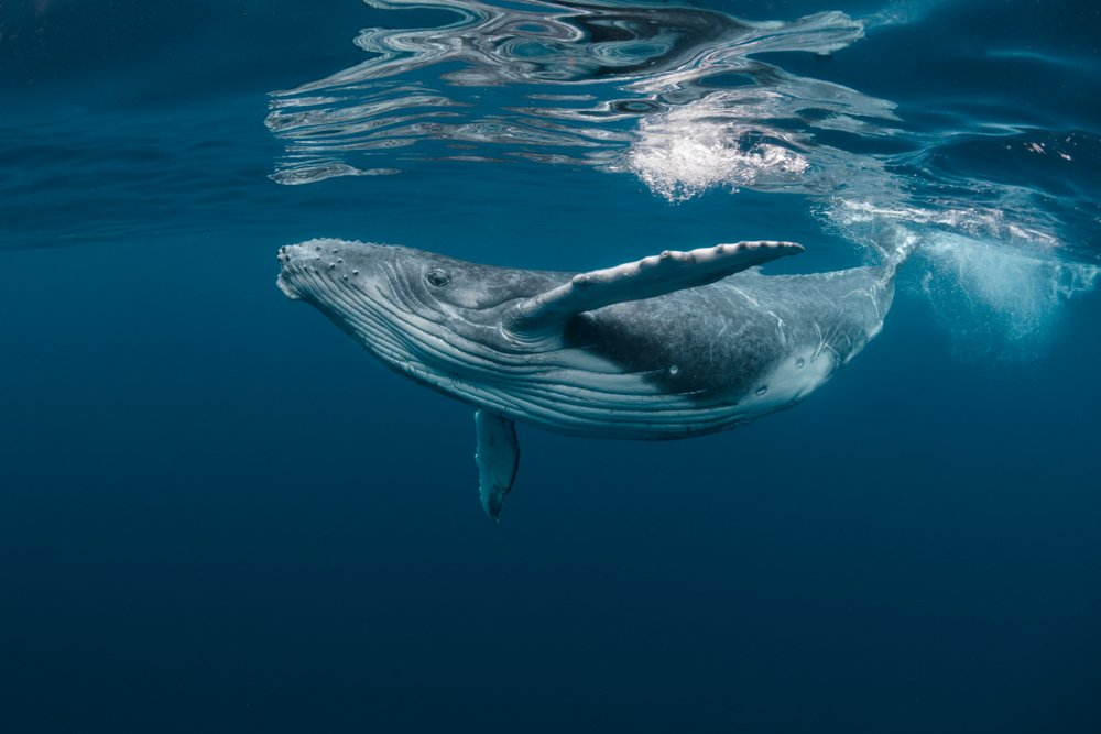 A photo of a whale | Photo: Shutterstock