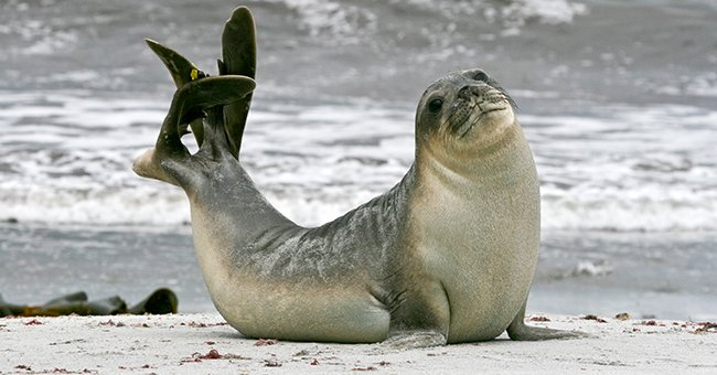 Scientists Enlist the Support of Antarctic Seals to Study Melting Glaciers