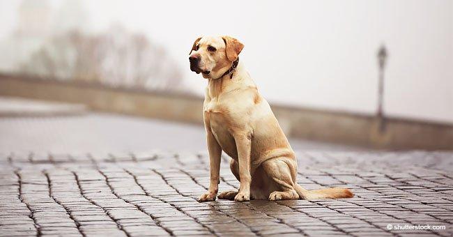 Momento en que amoroso perrito es abandonado por su cruel dueño en una estación de tren