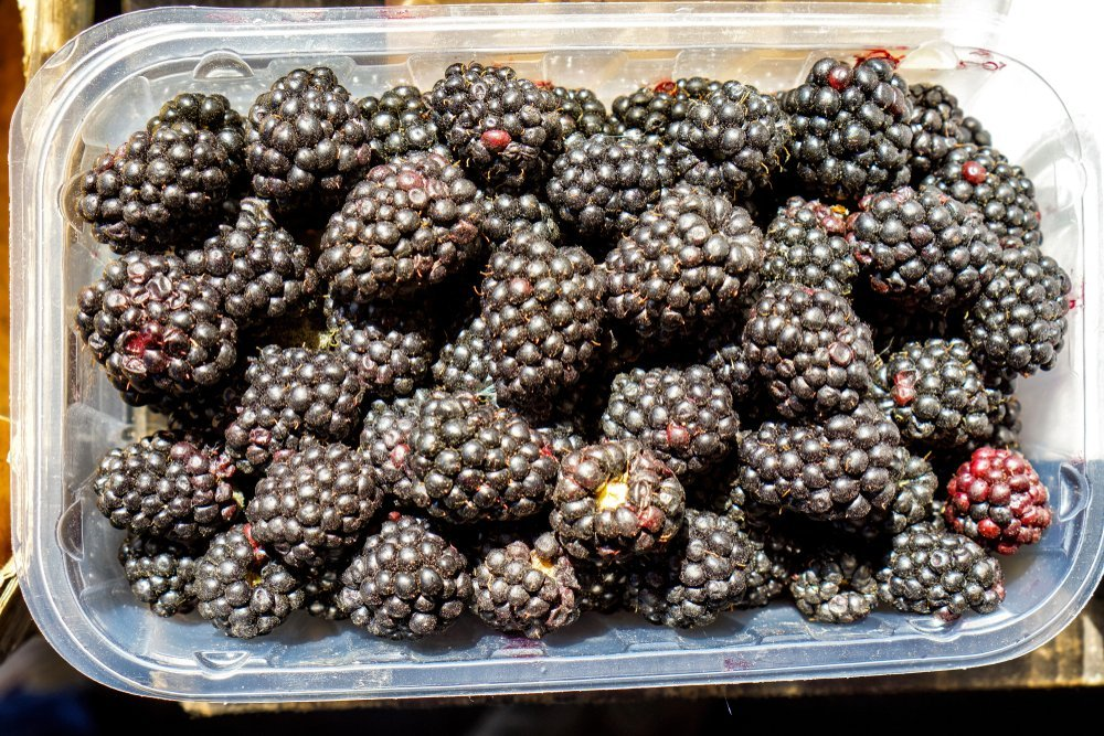 Blackberries in a plastic container | Photo: Shutterstock