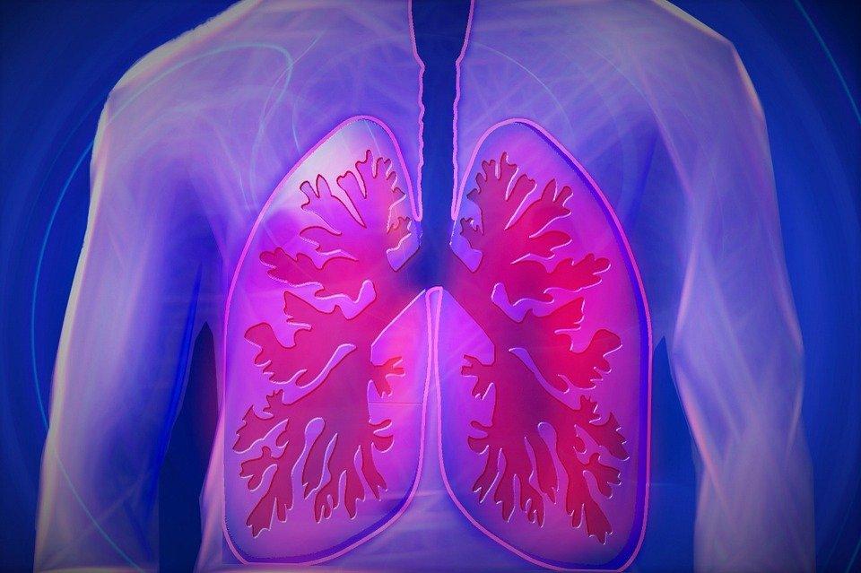 Pulmones. | Imagen: Pixabay