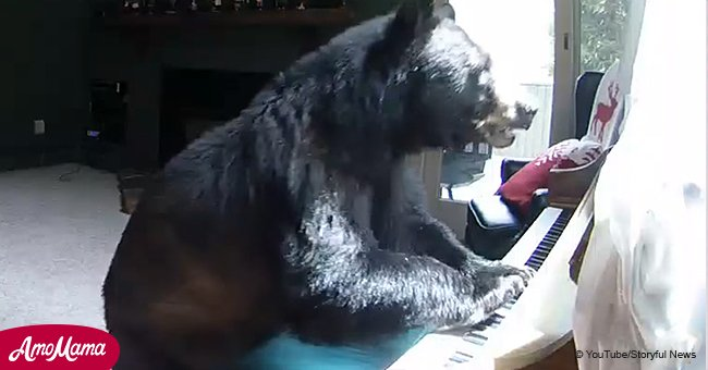 Home camera caught bear intruder inside home
