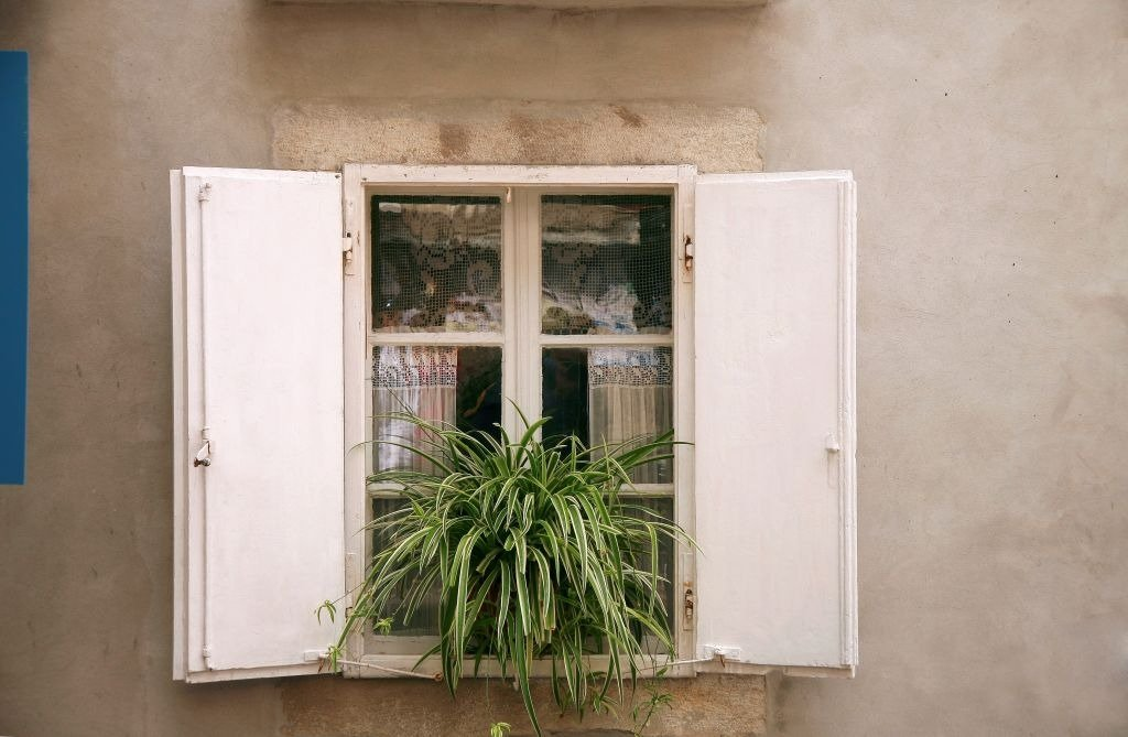Photo of a Spider plant  on a  window.   Photo: Getty Images