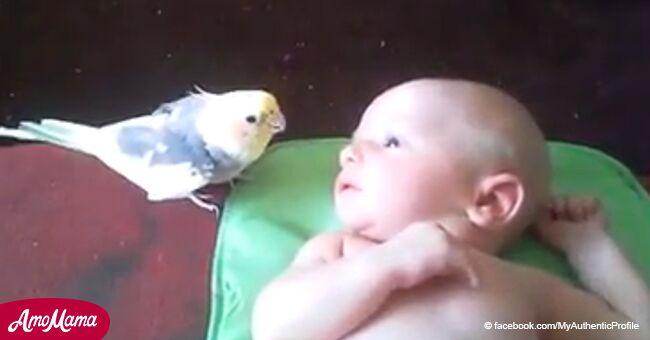 Video viral: loro canta hermosa canción a bebé y obtiene una reacción adorable