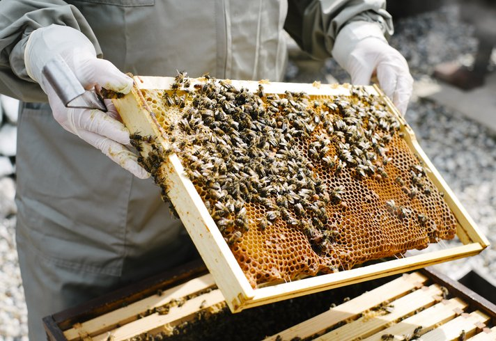 Beekeper inspecting his hives in his garden | Photo: Getty Images