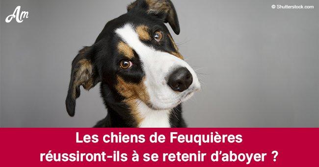 Le maire de Feuquières dans l'Oise fait passer une loi qui interdit aux chiens d'aboyer