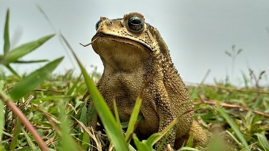 Close-up photo of a frog on grass   Photo: Getty Images