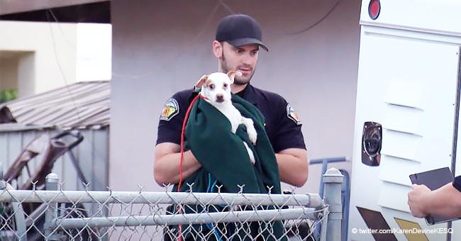 Mujer arrestada por arrojar 7 cachorros a la basura tenía otros 38 perros en su casa