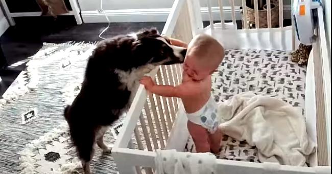 Un chien et un bébé s'embrassent gentiment après la sieste, selon leur routine